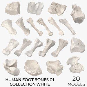 3D Human Foot Bones 01 Collection White - 20 models