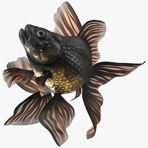 3D model Black Moor Goldfish Swim