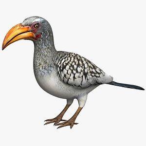 Yellow Hornbill 3D