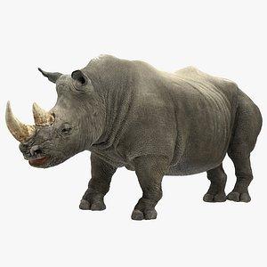 3D rhino rigged modo