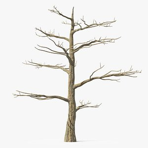 Podocarpus Trunk 3D model