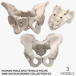 3D Human Male and Female Pelvis and Sacrum Bones Collection White - 3 models