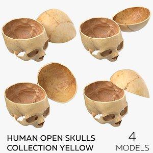 Human Open Skulls Collection Yellow - 4 models 3D model