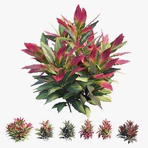 3D Cordyline fruticosa plant set 07 model
