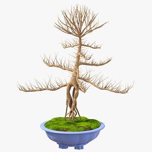 3D model Bare Bonsai Tree in Pot Fur