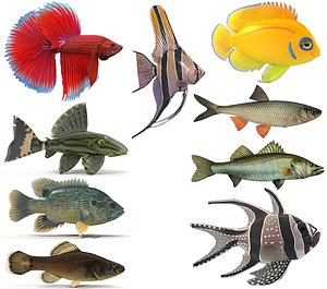 3D Fish Collection model