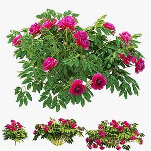 3D model plant peony set 02