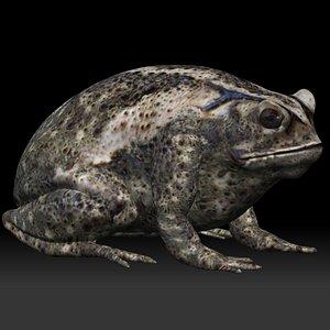 Cane Toad frog bullfrog model