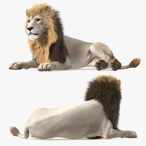 White Male Lion Lying Pose Fur 3D model