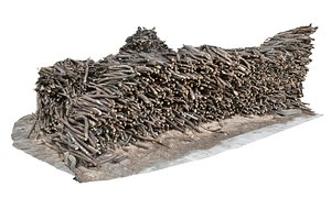 Logs  branches  scan model