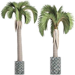 3D palm plants model