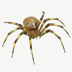 3d orb-weaver spider model