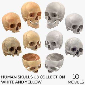 Human Skulls 03 Collection White and Yellow - 10 models 3D