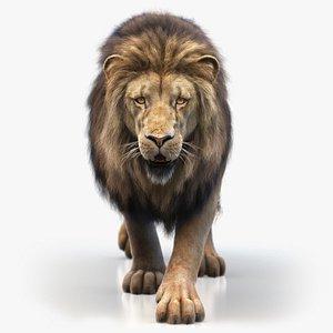 Lion XGEN CORE 3D