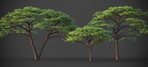 XfrogPlants Umbrella Thorn Acacia - Vachellia Tortilis 3D model