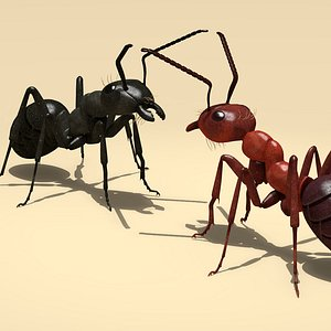 3D ant red black