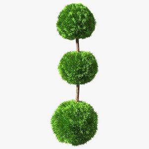Platycladus Tree Trimmed 3D model