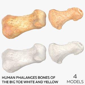 Human Phalanges Bones of the Big Toe White and Yellow - 4 models 3D model