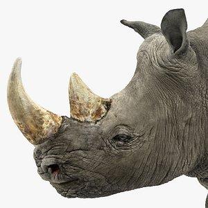3D rhino rigged model