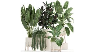 3D Houseplants in a white rattan basket for the interior 913