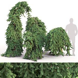 Picea Inversa 01 3D model
