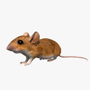 3D model mouse