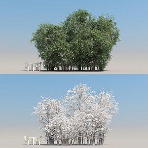 3D summer elaeagnus tree leaves model