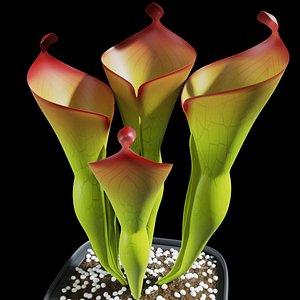 3D plant sun pitcher
