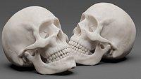 Photorealistic human skull