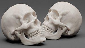 Photorealistic human skull 3D model