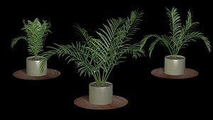 3D palm tree interior model