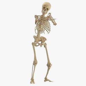 human male female 3D model