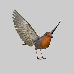 Robin Bird model