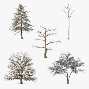 Winter Trees Collection 6 3D model