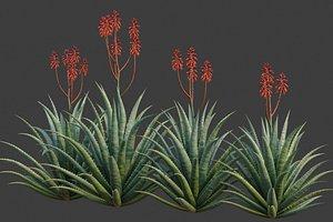 3D XfrogPlants Aloe Blue Elf - Aloe Monrovia