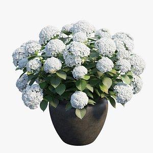 Hydrangea in planters set 02