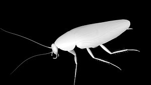 3D insect cockroach model