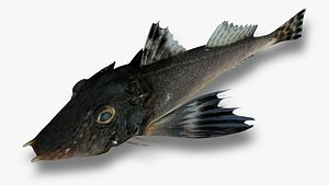 3D model Twobeak Searobin