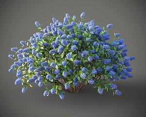 3D XfrogPlants Blueblossom - Ceanothus Thyrsiflorus