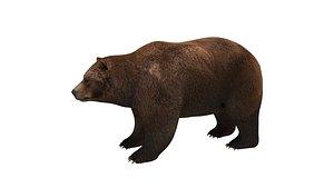 brown bear model