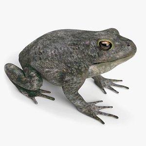toad animal amphibian 3D model