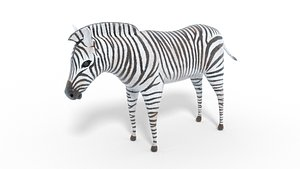 3D animal nature zebra