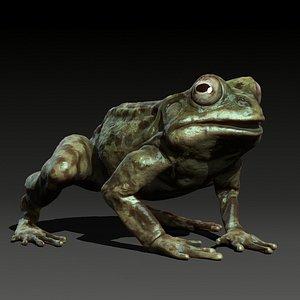 animal frog 3D
