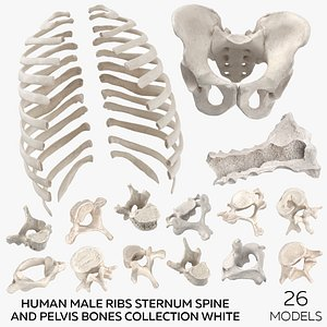 Human Male Ribs Sternum Spine and Pelvis Bones Collection White - 26 models model