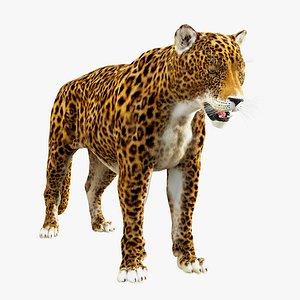 3D Jaguar Panthera Onca