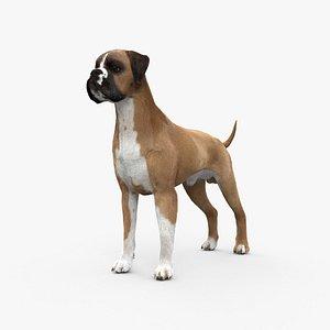 Boxer Dog HD 3D model