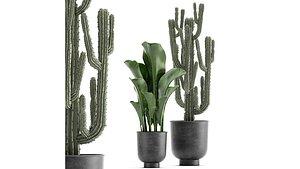 plants pot flowerpot 3D model