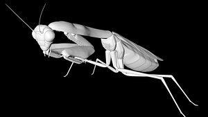 praying mantis 3D model
