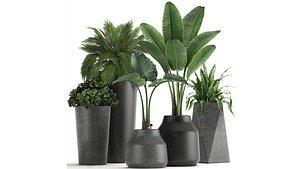 plants decorative flowerpots model