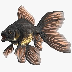 3D model Black Moor Goldfish Rigged for Cinema 4D